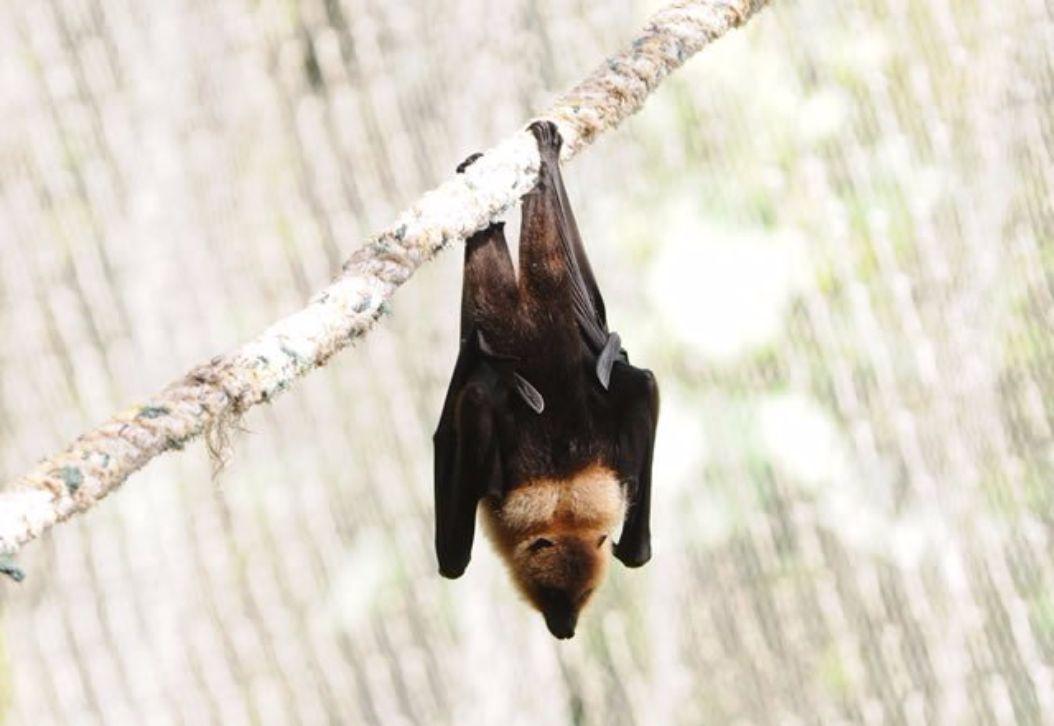 La Vanille Nature Park Bats